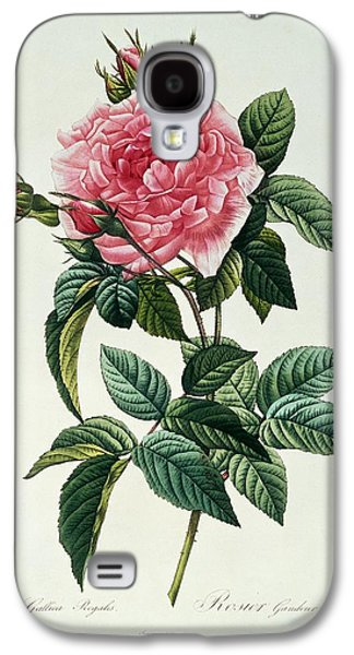 Nature Study Drawings Galaxy S4 Cases - Rosa Gallica Regalis Galaxy S4 Case by Pierre Joseph Redoute