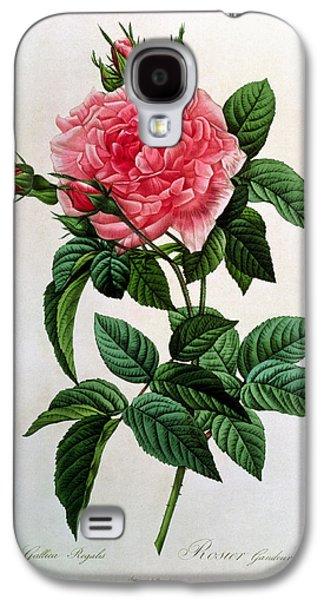 Rosa Gallica Regallis Galaxy S4 Case by Pierre Joseph Redoute