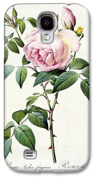 Rosa Indica Fragrans Galaxy S4 Case