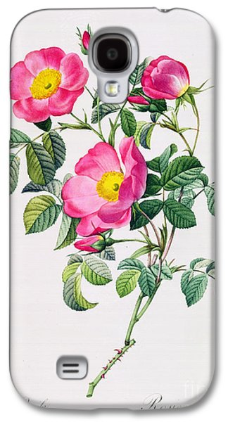 Nature Study Drawings Galaxy S4 Cases - Rosa Lumila Galaxy S4 Case by Pierre Joseph Redoute