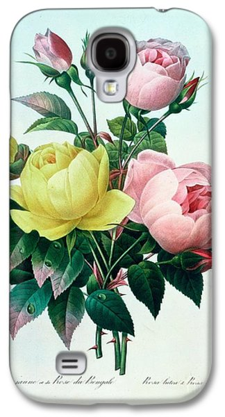 Rosa Lutea And Rosa Indica Galaxy S4 Case by Pierre Joseph Redoute