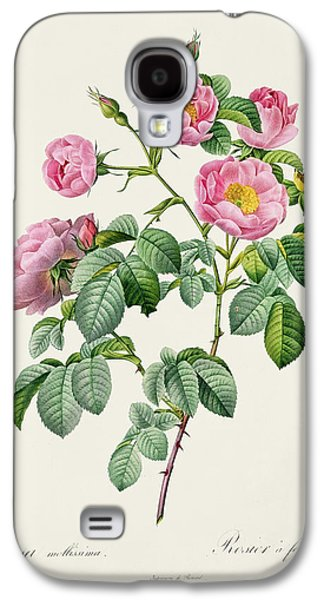 Rosa Mollissima Galaxy S4 Case by Claude Antoine Thory