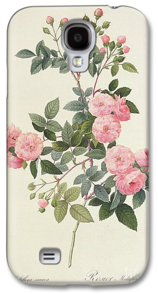 Engraving Galaxy S4 Case - Rosa Multiflora Carnea by Pierre Joseph Redoute