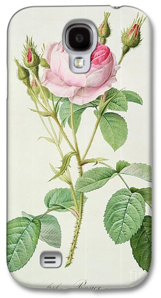 Nature Study Drawings Galaxy S4 Cases - Rosa muscosa multiplex Galaxy S4 Case by Pierre Joseph Redoute
