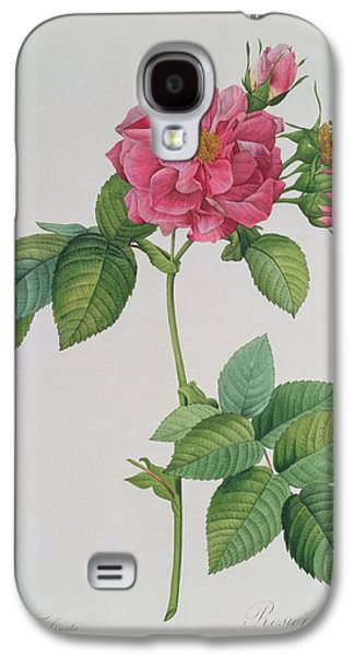 Rose Galaxy S4 Case - Rosa Turbinata by Pierre Joseph Redoute
