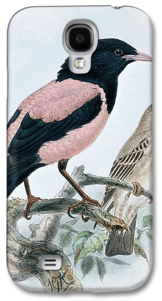 Rose Colored Starling Galaxy S4 Case
