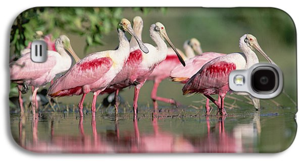 Spoonbill Galaxy S4 Case - Roseate Spoonbill Flock Wading In Pond by Tim Fitzharris