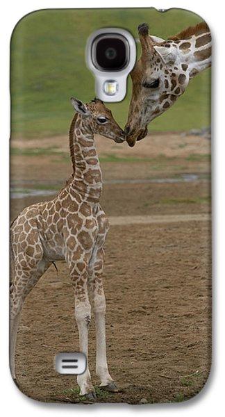 Rothschild Giraffe Giraffa Galaxy S4 Case