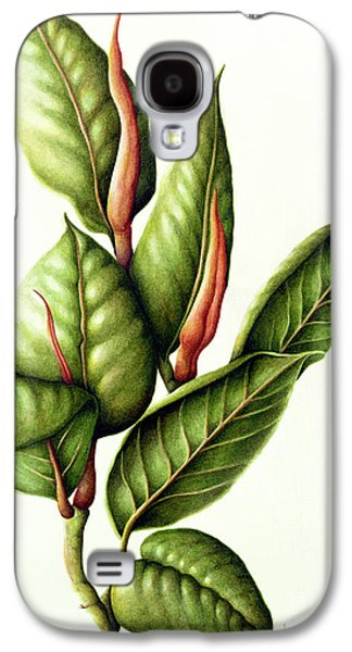 Rubber Plant Galaxy S4 Case by Annabel Barrett