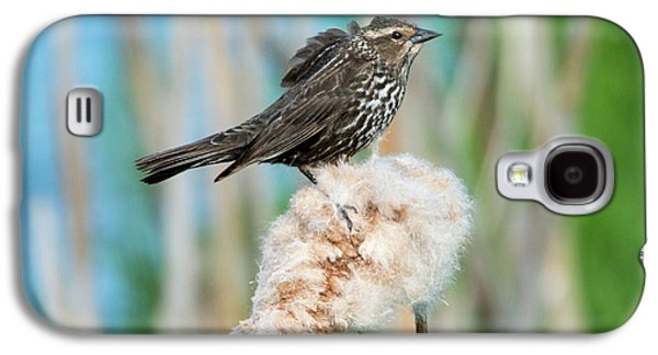 Ruffled Feathers Galaxy S4 Case by Mike Dawson
