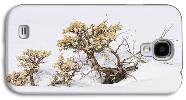 Sagebrush Bonsai In Snow Galaxy S4 Case by Shelley Dennis