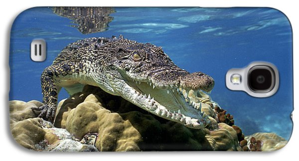 Saltwater Crocodile Smile Galaxy S4 Case by Mike Parry