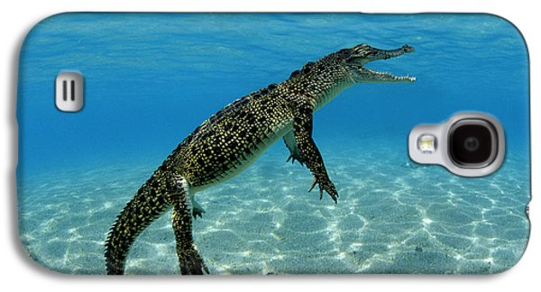 Saltwater Crocodile Galaxy S4 Case by Franco Banfi and Photo Researchers