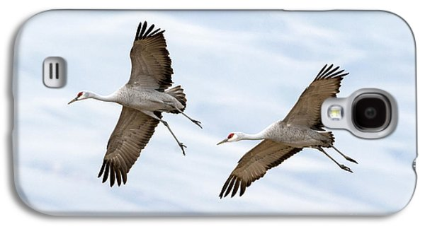 Sandhill Crane Approach Galaxy S4 Case