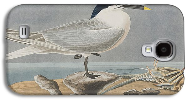 Sandwich Tern Galaxy S4 Case by John James Audubon