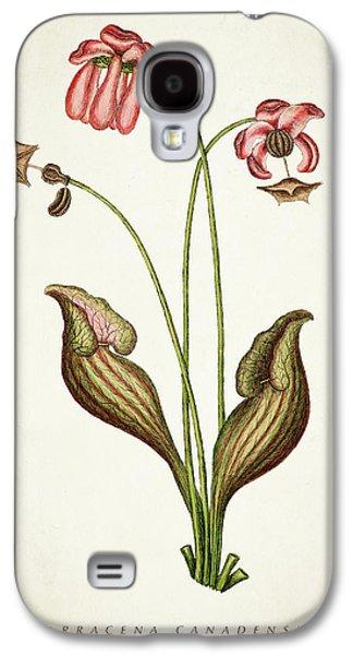 Sarracena Canadensis Botanical Print Galaxy S4 Case