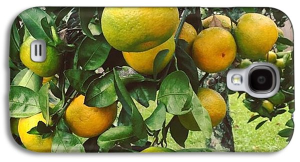 Orange Galaxy S4 Case - Satsumas..we Wait All Year For These by Scott Pellegrin