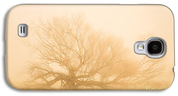 Scary Tree Scenes Galaxy S4 Case by Jorgo Photography - Wall Art Gallery