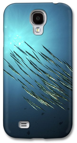 Schools Of Fish Galaxy S4 Cases - School Of Razorfish, North Sulawesi Galaxy S4 Case by Mathieu Meur