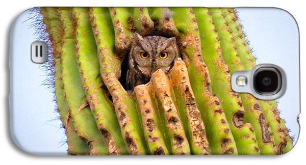 Screech Owl In Saguaro Galaxy S4 Case