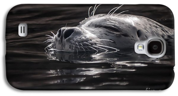 Sea Lion Basking In The Light Galaxy S4 Case