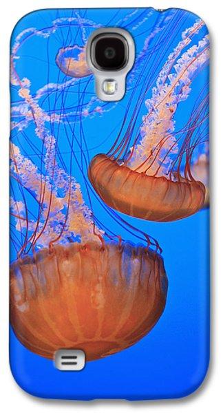 Sea Nettles Chrysaora Fuscescens In Galaxy S4 Case by Stuart Westmorland