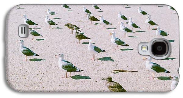 Seagulls  Galaxy S4 Case by Ariane Moshayedi