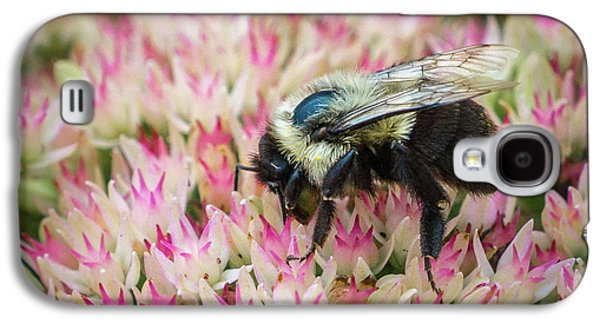 Galaxy S4 Case featuring the photograph Sedum Bumbler by Bill Pevlor