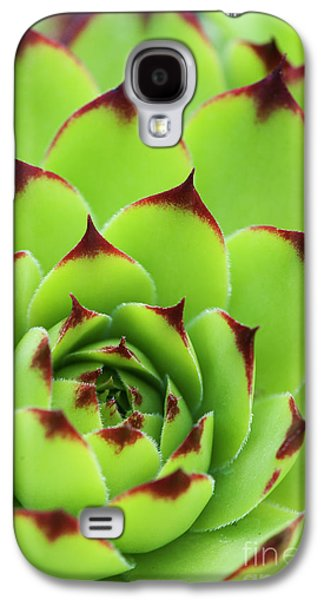Sempervivum Tectorum Royanum Galaxy S4 Case by Tim Gainey