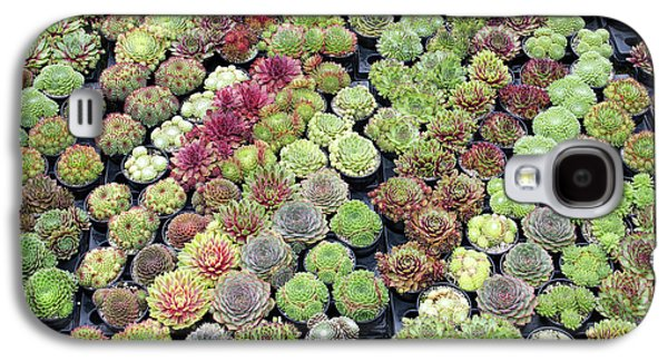 Sempervivums Galaxy S4 Case by Tim Gainey