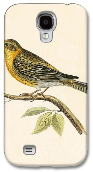 Serin Finch Galaxy S4 Case by English School