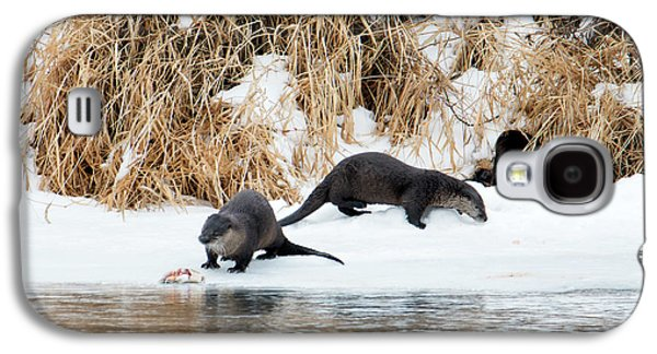Otter Galaxy S4 Case - Sharing A Meal by Mike Dawson