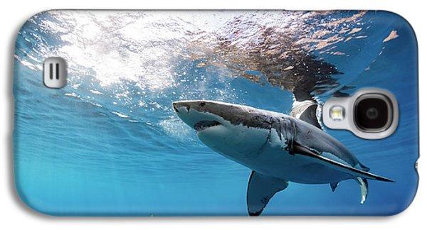 Shark Rays Galaxy S4 Case by Shane Linke