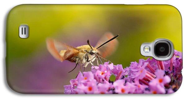 Like A Rainbow - Broad Bordered Bee Hawk-moth Galaxy S4 Case by Roeselien Raimond