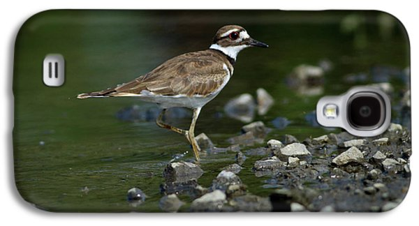 Killdeer Galaxy S4 Case - Killdeer  by Douglas Stucky