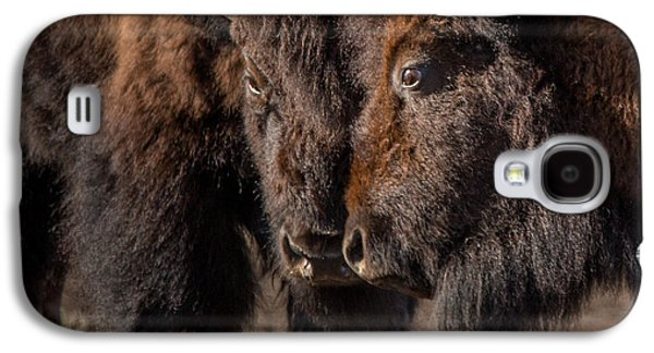 Siblings // Lamar Valley, Yellowstone National Park Galaxy S4 Case by Nicholas Parker
