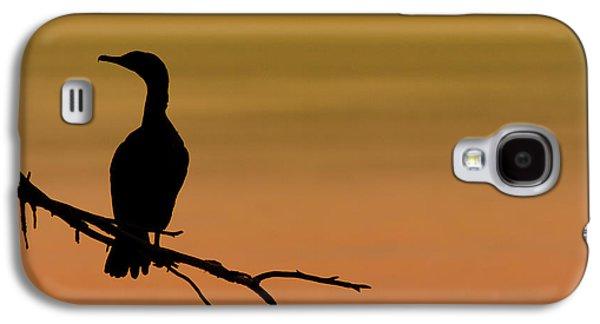 Silhouette Cormorant Galaxy S4 Case by Sebastian Musial