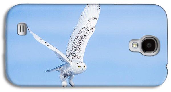 Snowy Owls Soaring Galaxy S4 Case