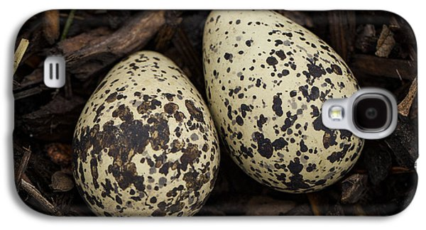 Killdeer Galaxy S4 Case - Speckled Killdeer Eggs By Jean Noren by Jean Noren