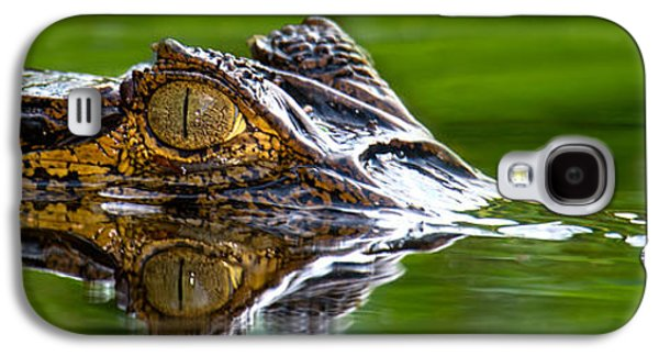 Crocodile Galaxy S4 Case - Spectacled Caiman Caiman Crocodilus by Panoramic Images