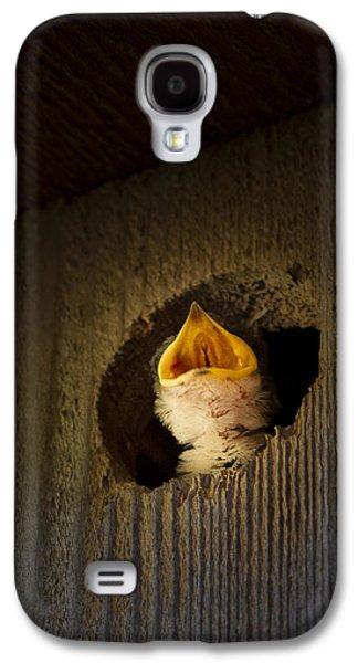 Spotlight On Baby Swallow Galaxy S4 Case
