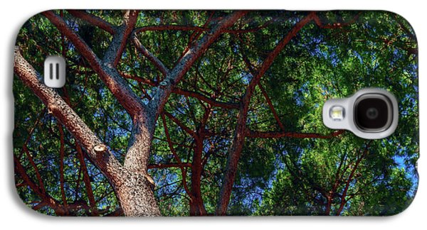 Spreading Trees Provide Shade And Coolness On A Hot Summer Day Galaxy S4 Case by George Westermak