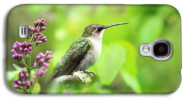 Spring Beauty Ruby Throat Hummingbird Galaxy S4 Case by Christina Rollo
