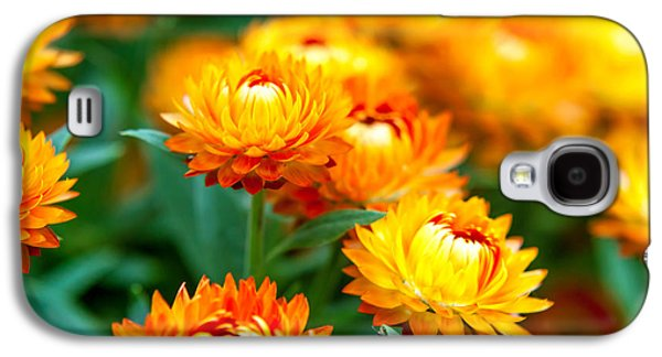 Spring Flowers In The Afternoon Galaxy S4 Case by Az Jackson