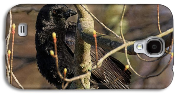 Springtime Crow Square Galaxy S4 Case