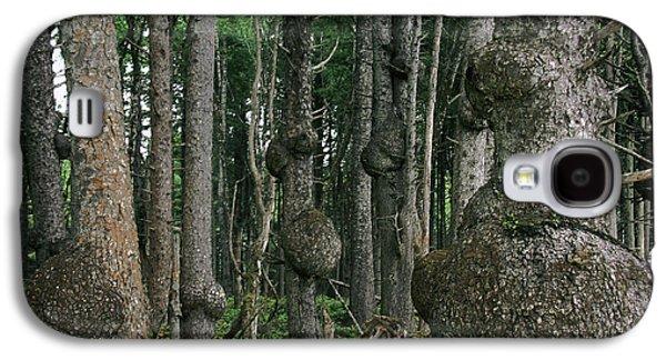 Spruce Burls Olympic National Park Wa Galaxy S4 Case