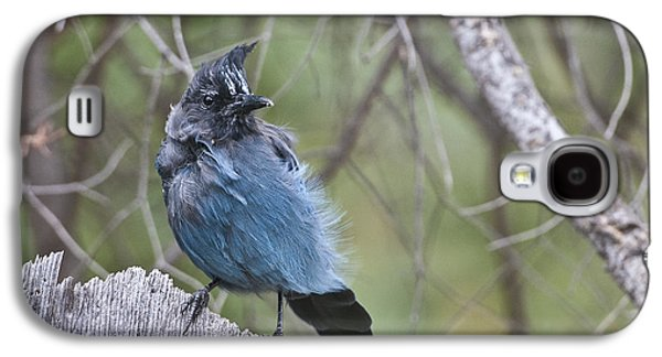 Galaxy S4 Case featuring the photograph Stellar's Jay by Gary Lengyel