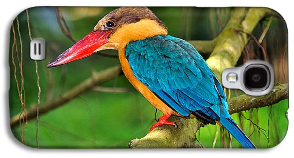 Stork-billed Kingfisher Galaxy S4 Case by Louise Heusinkveld