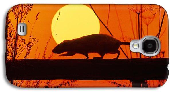 Stranglers Rattus Norvegicus Rat Galaxy S4 Case