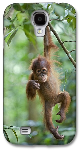 Animals and Earth - Galaxy S4 Cases - Sumatran Orangutan Pongo Abelii One Galaxy S4 Case by Suzi Eszterhas